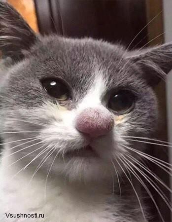 Когда кота укусила оса (1)