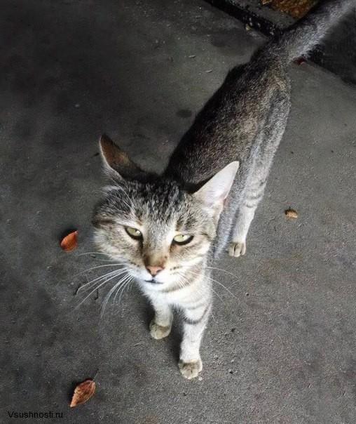 Когда кота укусила оса (3)