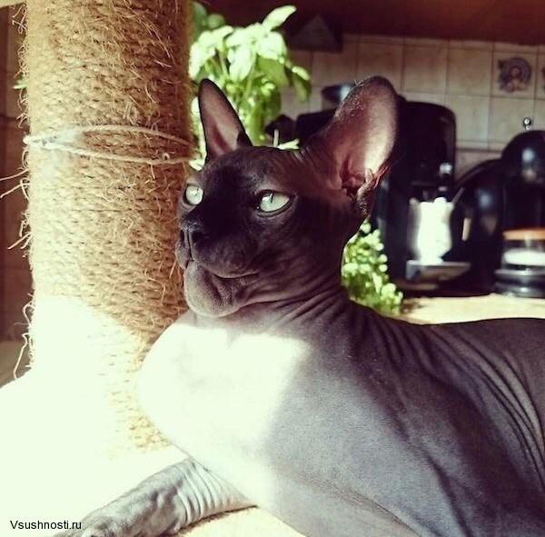Когда кота укусила оса (4)