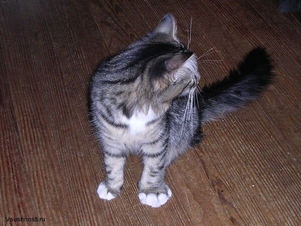 Когда кота укусила оса (5)