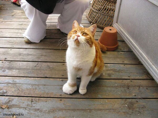 Когда кота укусила оса (8)