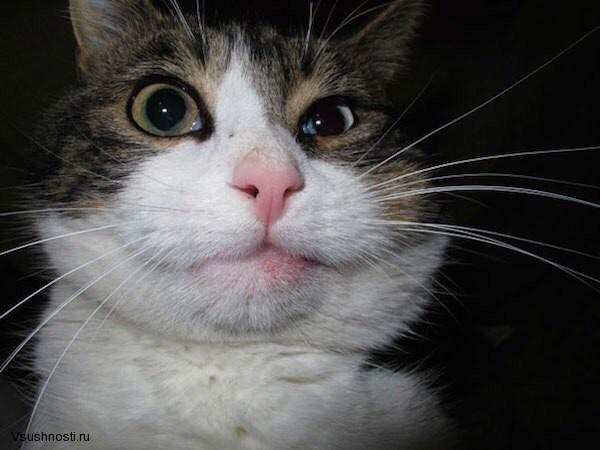 Когда кота укусила оса (9)