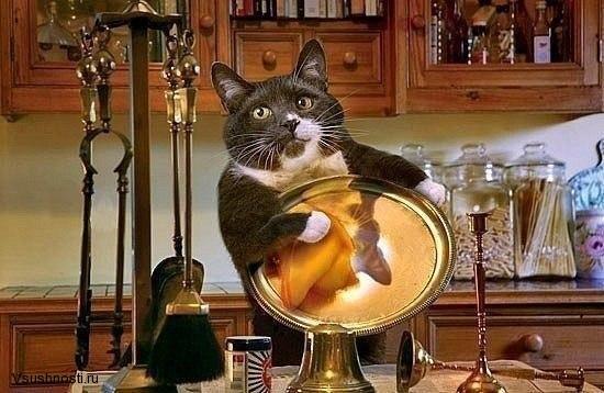 Как заставить кота мыть посуду (1)