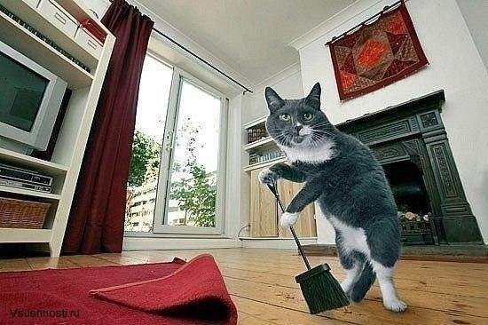 Как заставить кота мыть посуду (3)