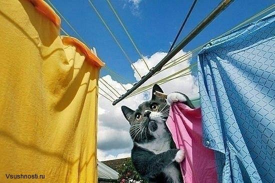 Как заставить кота мыть посуду (4)
