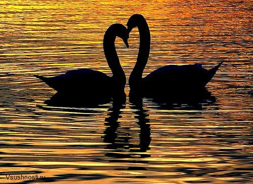 про любовь (7)